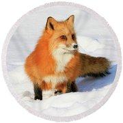 Red Fox Round Beach Towel by Steve McKinzie