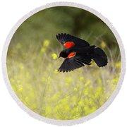 Red Winged Blackbird In Flight Round Beach Towel