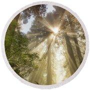 Redwoods Sunburst Round Beach Towel