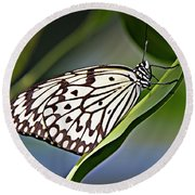 Rice Paper Butterfly 8 Round Beach Towel