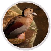 Round Beach Towel featuring the photograph Ringed Teal On A Rock by Chris Flees