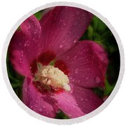 Rose Of Sharon Hibiscus With Rain Drops Round Beach Towel