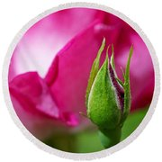 Round Beach Towel featuring the photograph Budding Rose by Rona Black