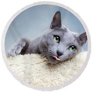 Russian Blue Cat Round Beach Towel