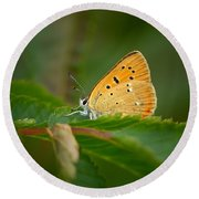 Round Beach Towel featuring the photograph Scarce Copper by Jouko Lehto