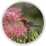 Scarlet Honeyeater Round Beach Towel