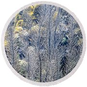 Round Beach Towel featuring the photograph Sea Plumes Coral by Perla Copernik
