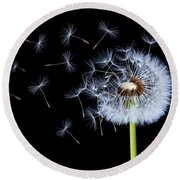 Silhouettes Of Dandelions Round Beach Towel