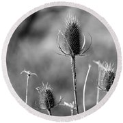 Round Beach Towel featuring the photograph Simply Thistle by Rick Morgan