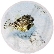 Round Beach Towel featuring the photograph Smooth Trunkfish by Perla Copernik