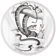 Round Beach Towel featuring the drawing Snakes And Frogs Of Costa Rica by T Sinclair