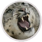 Snarling Snow Leopard Round Beach Towel
