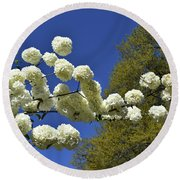 Round Beach Towel featuring the photograph Snowballs by Skip Willits