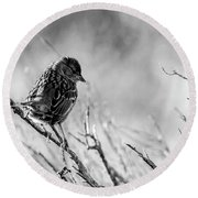 Snarky Sparrow, Black And White Round Beach Towel