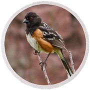 Spotted Towhee Round Beach Towel by Steven Parker