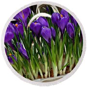 Round Beach Towel featuring the photograph Spring Crocuses by AmaS Art
