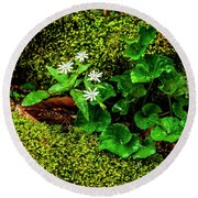Star Chickweed Mossy Rock Round Beach Towel