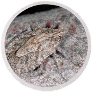 Round Beach Towel featuring the photograph Stink Bug by Breck Bartholomew