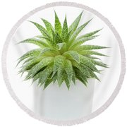 Round Beach Towel featuring the photograph Succulent Plant by Elena Elisseeva