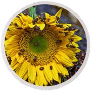 Sunflower Covered In Ladybugs Round Beach Towel