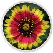 Round Beach Towel featuring the photograph Sunflower by Ed Clark