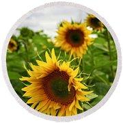 Sunflower Field Round Beach Towel