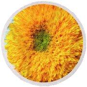 Sunflower Study Round Beach Towel