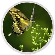 Round Beach Towel featuring the photograph Elegant Swallowtail Butterfly by Christina Rollo