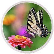 Round Beach Towel featuring the photograph Swallowtail On A Zinnia by Rodney Campbell