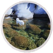 Round Beach Towel featuring the photograph Tahoe Wild  by Sean Sarsfield