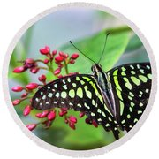Round Beach Towel featuring the photograph Tailed Green Jay Butterfly  by Saija Lehtonen