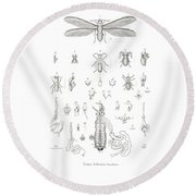Round Beach Towel featuring the drawing Termites, Macrotermes Bellicosus by H Hagen