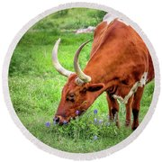 Texas Longhorn Grazing Round Beach Towel