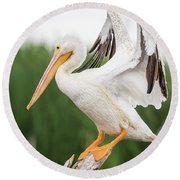 The Amazing American White Pelican  Round Beach Towel