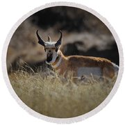 The Antelope Round Beach Towel