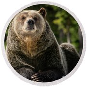 The Grizzly Bear Grinder Round Beach Towel