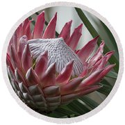 The King Of Proteas Round Beach Towel