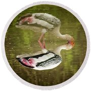 The Painted Stork  Mycteria Leucocephala  Round Beach Towel