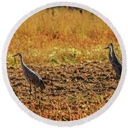 Three Amigos  Round Beach Towel by Robert Bales