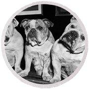 Three English Bulldogs Round Beach Towel