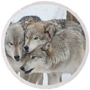 Three Wolves Are A Crowd Round Beach Towel by Gary Slawsky