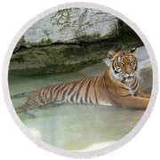 Tiger Round Beach Towel by John Black