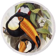 Toucan Round Beach Towel by John Gould