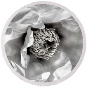 Round Beach Towel featuring the photograph Tree Peony 'mystery' by Ann Jacobson