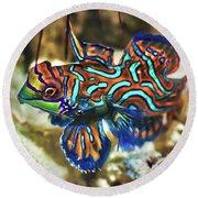 Tropical Fish Mandarinfish Round Beach Towel