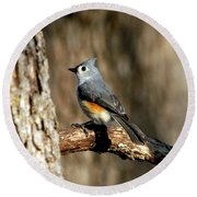 Tufted Titmouse On Branch Round Beach Towel