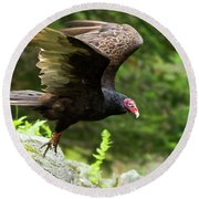 Round Beach Towel featuring the photograph Turkey Vulture by Mircea Costina Photography