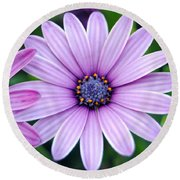 The African Daisy 3 Round Beach Towel