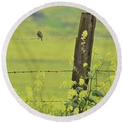 Warbler In The Meadow Round Beach Towel