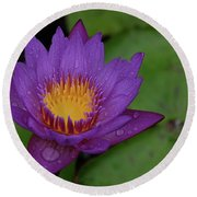 Water Lily Round Beach Towel by Ronda Ryan